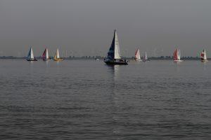 Blister-Segler auf der Elbe