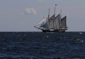 Großsegler in der Ostsee